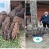 Các công thức chế biến thức ăn cho lợn rừng hiệu quả