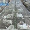 Chia sẻ bí quyết tự chế biến thức ăn cho thỏ thịt