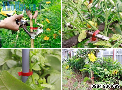 Buộc hoa và các loại rau bằng Dụng cụ buộc cành cây 3A