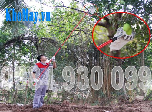 Dụng cụ hái quả 3A3M || Dụng cụ hái trái cây 3A3M
