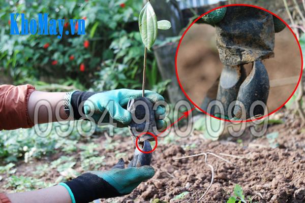 Sử dụng móng vuốt của găng tay làm vườn có móng 3A để rạch đáy bầu ươm cây