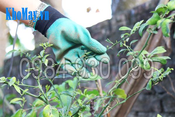 Găng tay làm vườn có móng 3A giúp bảo vệ đôi tay khỏi gai nhọn