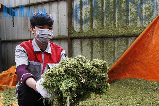 Sản phẩm của máy thái cỏ