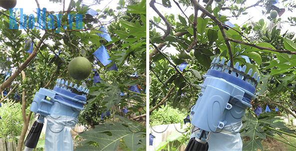 Đưa miệng giỏ tới quả cần hái - Dụng cụ hái trái cây trên cao chạy điện 3A