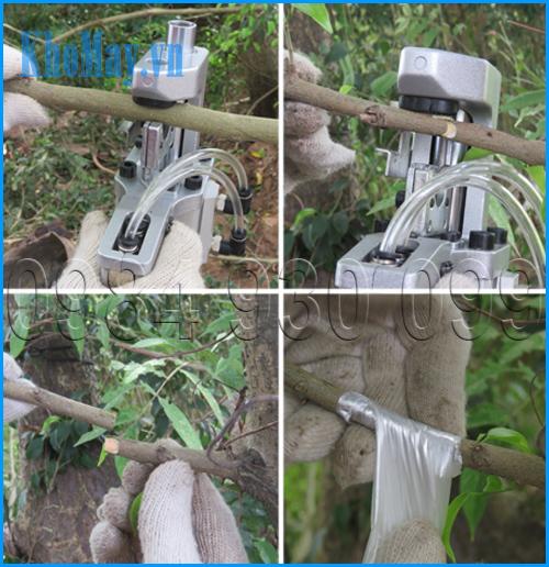 Thao tác cắt ghép cành cây