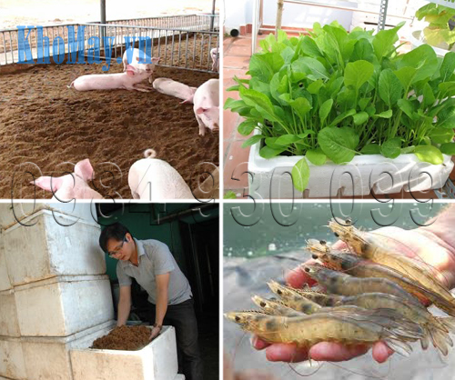 Những ứng dụng của xơ dừa và bột bã mía trong nông nghiệp, chăn nuôi và thủy sản