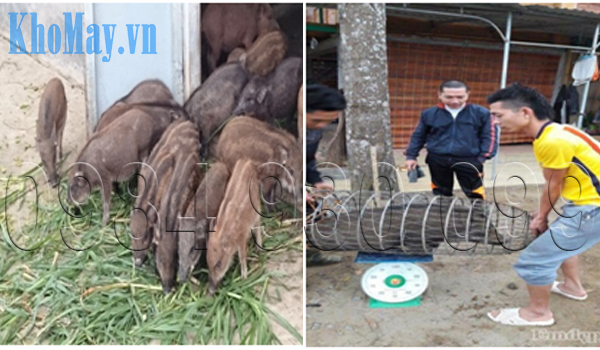 Các công thức chế biến thức ăn cho lợn rừng