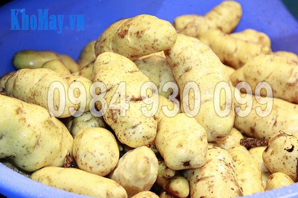 Khoai tây được rửa sạch bằng Máy rửa nông sản 3A XD500