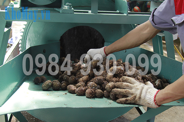 Đưa nguyên liệu vào trong lồng rửa của Máy rửa nông sản 3A XD500