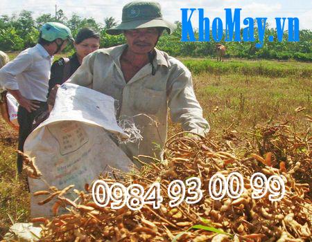 Thu hoạch đậu tương