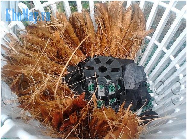 Trồng hoa lan bằng xơ dừa