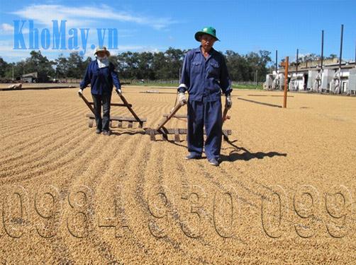 Ủ vỏ cà phê làm giá thể trồng rau