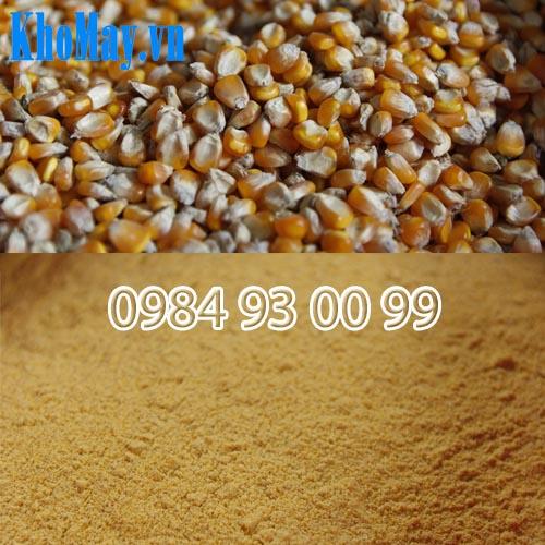 hạt bắp đã được máy nghiền thành cám